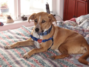 Brio shortly after adoption and her move from California to Oregon.