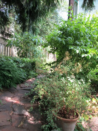 View of the path at Di and Scott's