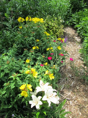 Lilies, evening primrose, rose campion.