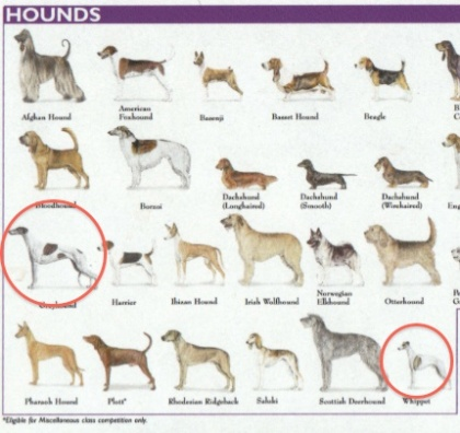 Hounds on Dog Breed Chart