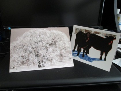 Sparkling tree from Kathy; cattle in snow (painting by Teresa Jordan) from Meg.