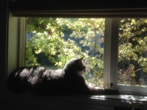 Riley's window for watching beavers, bees, ducks, trees, otters, and the comings and goings of neighbors.