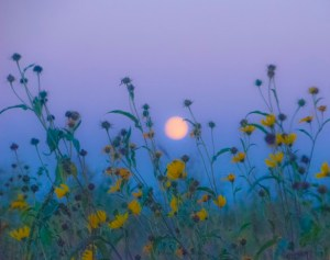 moon over prairie